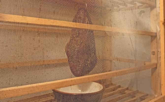 Beim Schinken trocken pökeln muss der Schinken vor Insekten geschützt werden.